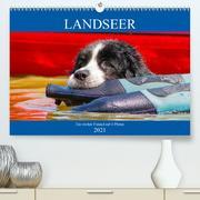 Landseer - Ein starker Freund auf 4 Pfoten (Premium, hochwertiger DIN A2 Wandkalender 2021, Kunstdruck in Hochglanz)