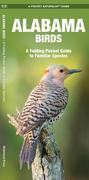 Alabama Birds: An Introduction to Familiar Species