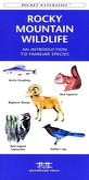 Southwest Desert Birds: A Folding Pocket Guide to Familiar Species