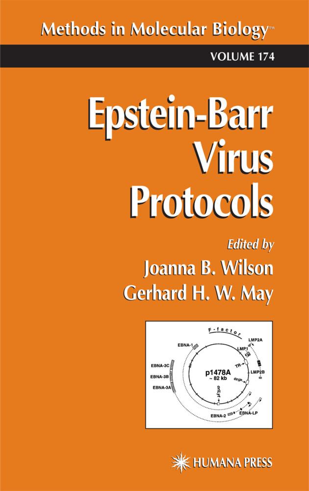 Epstein-Barr Virus Protocols als Buch