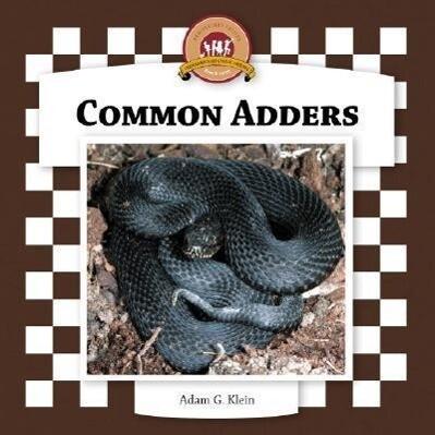 Common Adders als Buch