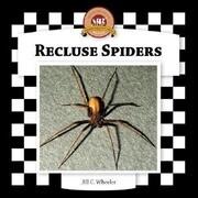 Recluse Spiders