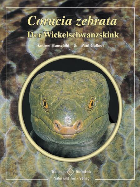 Der Wickelschwanzskink als Buch