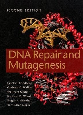 DNA Repair and Mutagenesis als Buch