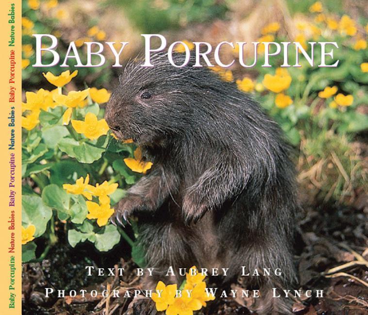 Baby Porcupine als Taschenbuch