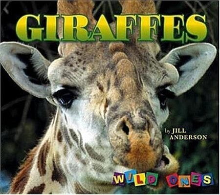 Giraffes als Taschenbuch