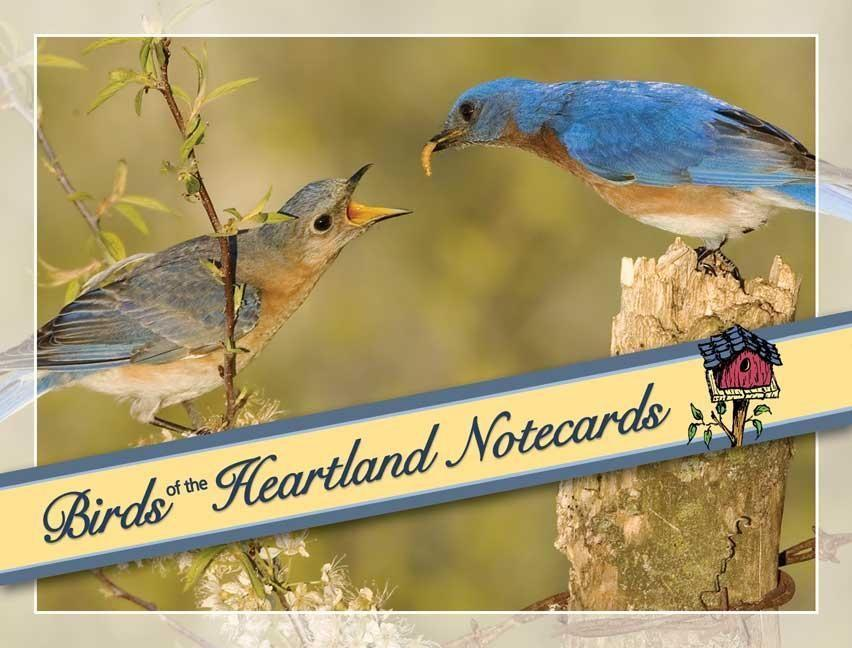 Birds of the Heartland Notecards [With 12 Envelopes] als Buch