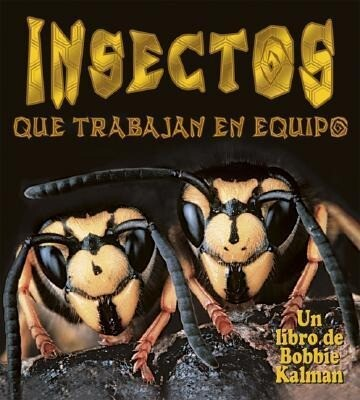 Insectos Que Trabajan en Equipo = Insects That Work Together als Taschenbuch