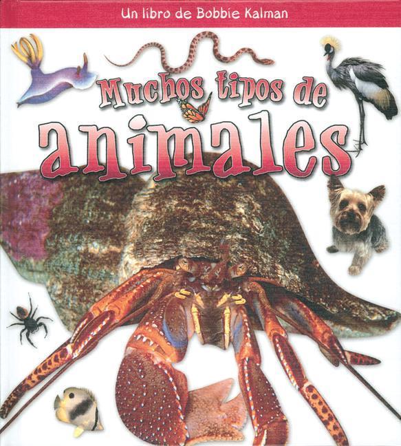 Muchos Tipos de Animales als Buch