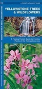 Yellowstone Trees & Wildflowers: An Introduction to Familiar Species of the Yellowstone Area