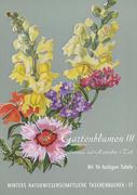 Gartenblumen / Sommerflor 1
