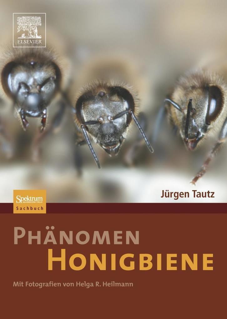 Phänomen Honigbiene als Buch von Jürgen Tautz, ...