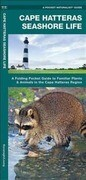 Cape Hatteras Seashore Life: An Introduction to Familiar Plants & Animals in the Cape Hatteras Region