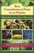 Best Groundcovers and Vines for the Prairies