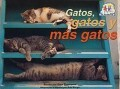 SPA-GATOS GATOS Y MAS GATOS
