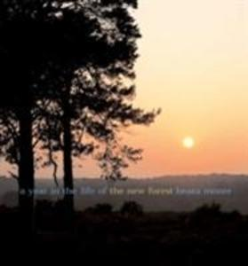 A A Year in the Life of the New Forest als Buch (gebunden)