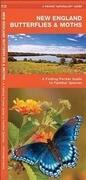 New England Butterflies & Moths: A Folding Pocket Guide to Familiar Species