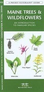 Maine Trees & Wildflowers: A Folding Pocket Guide to Familiar Species