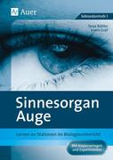 Sinnesorgan Auge