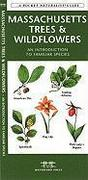 Massachusetts Trees & Wildflowers: A Folding Pocket Guide to Familiar Plants