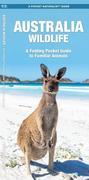 Australian Wildlife: An Introduction to Familiar Species