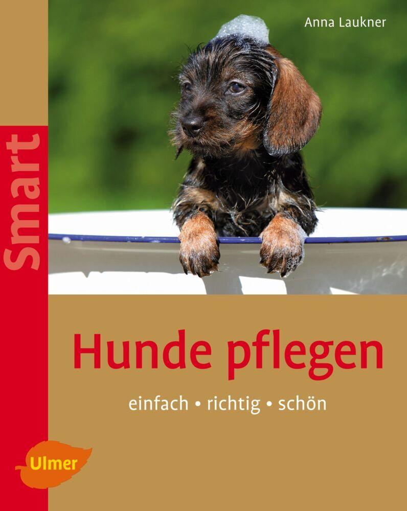 Hunde pflegen als Buch von Anna Laukner