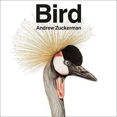 Bird als Buch von Andrew Zuckerman