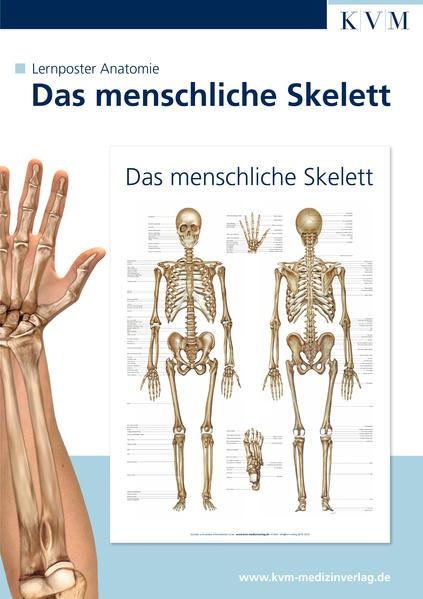 Anatomie Lernposter. Das menschliche Skelett (Spielwaren)